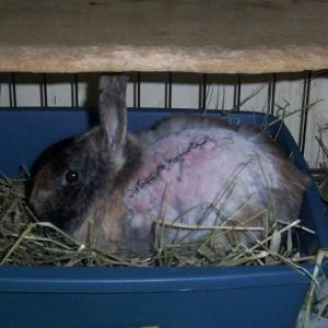 Jester after surgery Nov.2012