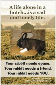 NRLB alone in a hutch poster