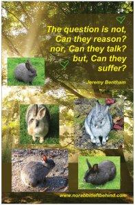 NRLB J.Bentham poster