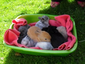Rustys babies