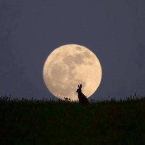 rabbit in moonlight